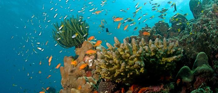 Cours de plongée krabi